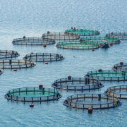 Aquaculture environmental impacts