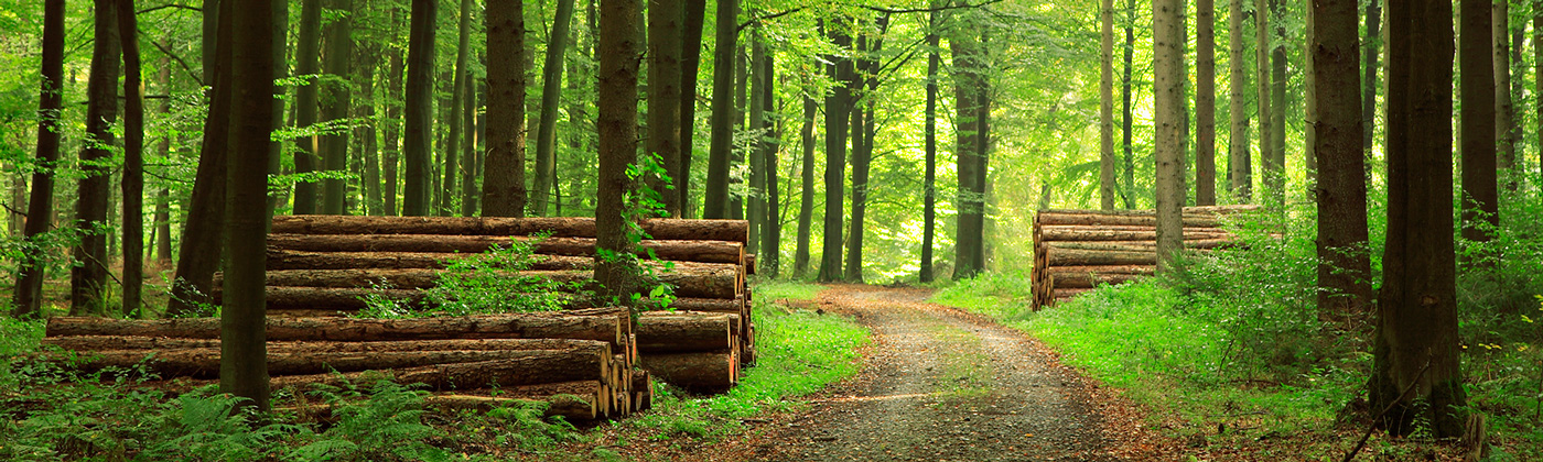 Trees-in-Wood