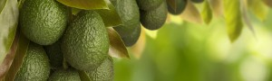 Blue-North-Sustainability-Consultants-Avo-Agriculture