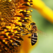 Odds stacked against SA beekeeping