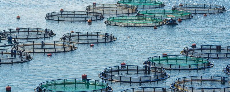Aquaculture environmental impacts